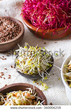 Colourful and healthy crunchy mixed seeds and various sprouts. Alfalfa, bean sprouts, red beet sprouts, linseed. - stock photo