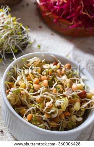 Colourful and healthy crunchy sprouts: bean sprouts with alfalfa and red beet sprouts in the background. - stock photo