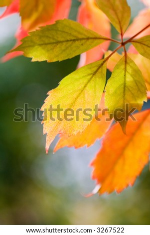 Colourful autumn leaves against blurry green background