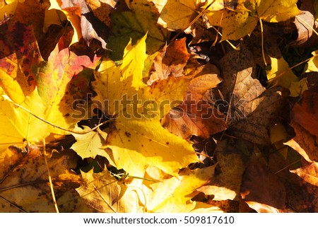 Colourful autumn leaves in a range orange yellow and brown