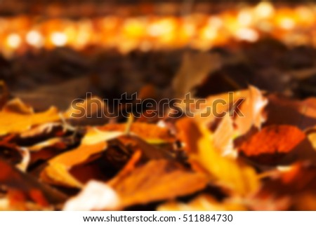 Colourful autumn leaves in a range orange yellow and brown Out of focus.