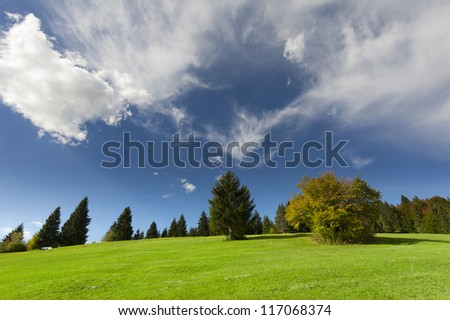 colourful bush in autumn with blue cloudy sky at green meadow - stock photo