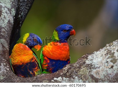 Colourful couple. On a tree two bright and colourful parrots, it is close and on a bright background. - stock photo