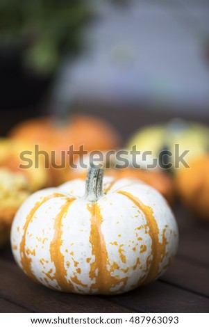 Colourful decorative autumn gourd.