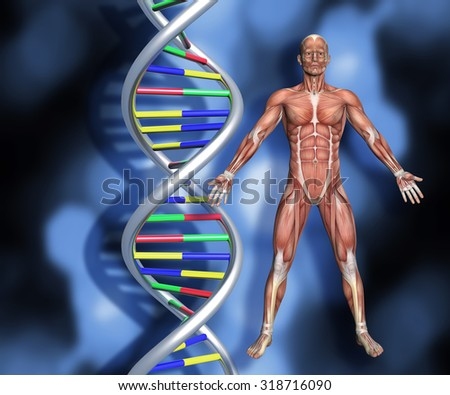 Colourful DNA strands on abstract background with a 3D male medical figure with muscle map - stock photo