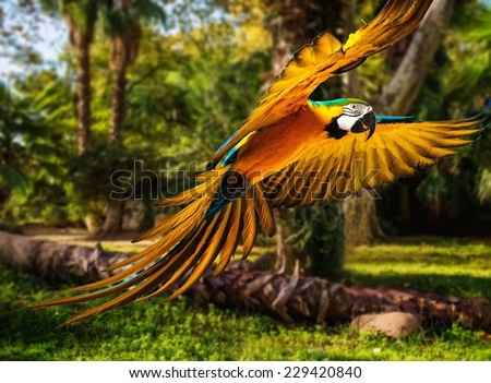 Colourful flying parrot in tropical landscape - stock photo