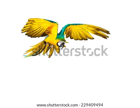 Colourful flying parrot isolated on white  - stock photo