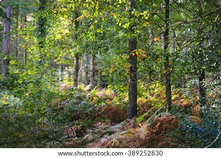 Colourful green vegetation in a deciduous oak forest - stock photo