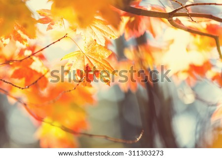 Colourful leaves in autumn season