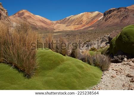 Colourful mountains at Suriplaza in the Atacama Desert of north east Chile. The green plants are rare native cushion plants, Azorella compacta or llareta in Spanish. Altitude is above 4,000 metres. - stock photo