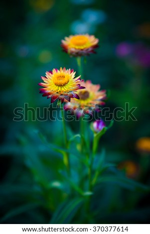 Colourful of paper flower - stock photo