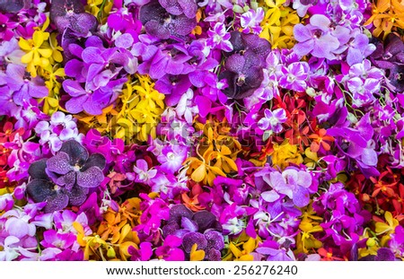 colourful orchid background - stock photo