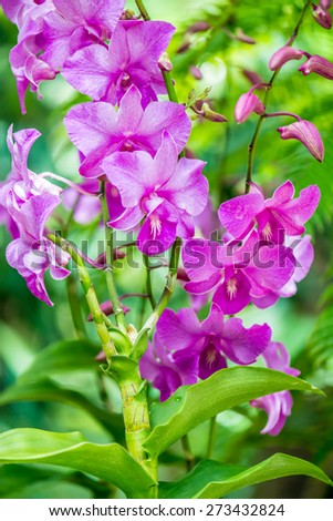 Colourful orchid flowers on bright summer day - stock photo
