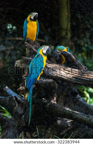 Colourful parrot bird with drop water - stock photo