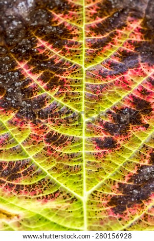 Colourful red leaf in autumn, Germany - stock photo