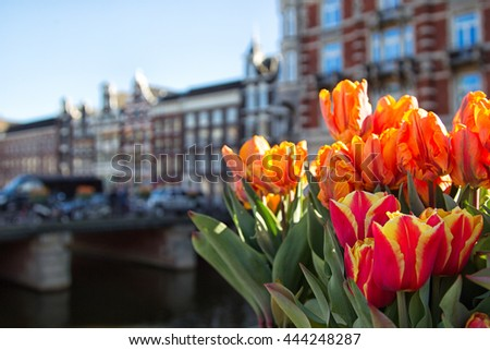 Colourful tulips at a canal in Amsterdam, Netherlands in spring.