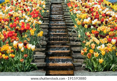 colourful tulips surrounding a staircase - stock photo