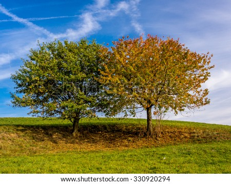 Colourful twin trees in Autumn