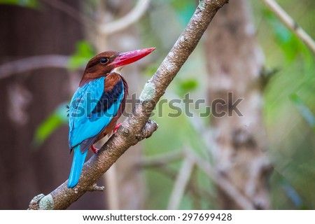Colourfull Bird in forest - stock photo