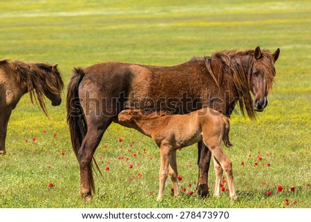 Colt and his mother mare - stock photo
