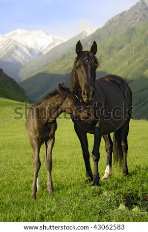 colt and mare - stock photo
