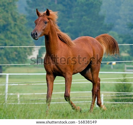 Colt trotting along fence line