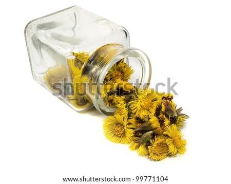 Colts Foot or Tussilago farfara in jar on a white background - stock photo