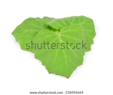 Coltsfoot leaf isolated on white - stock photo