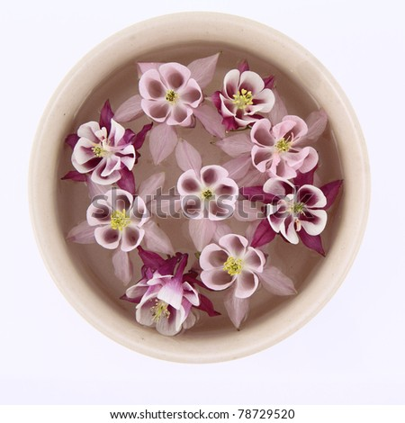 Columbine flowers floating in a bowl on white background - stock photo