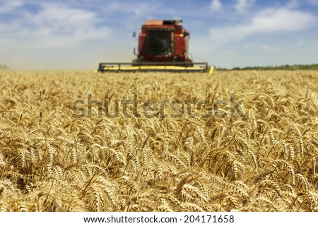 Combine harvester in action harvesting wheat. - stock photo