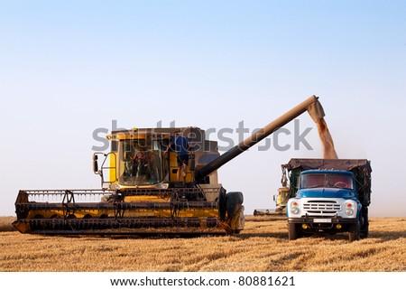 combine harvester in field wheat - stock photo