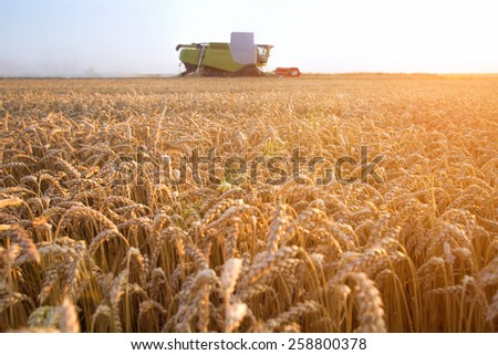 Combine harvester on the beautiful field of wheat with sunset and lens flare  - stock photo