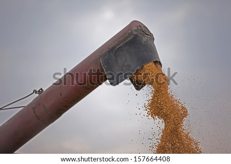 Combine harvester pouring corn maize seed - stock photo
