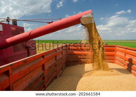 Combine harvester unloads wheat grain into the tractor trailer. - stock photo