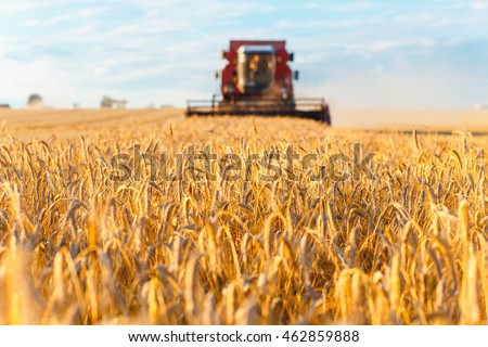 Combine harvester working on a wheat field. Front view.