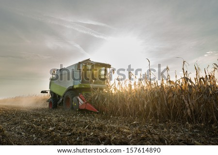 Combine harvesting crop corn grain fields  - stock photo