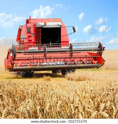 Combine harvesting wheat. - stock photo