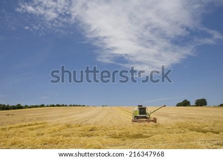 Combine in barley field - stock photo
