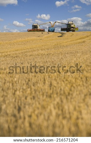 Combines harvesting wheat and filling trailer in sunny rural field