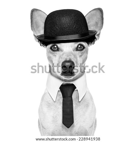 comedian classic dog terrier, wearing a bowler hat ,black tie and mustache, isolated on white background in black and white retro look - stock photo