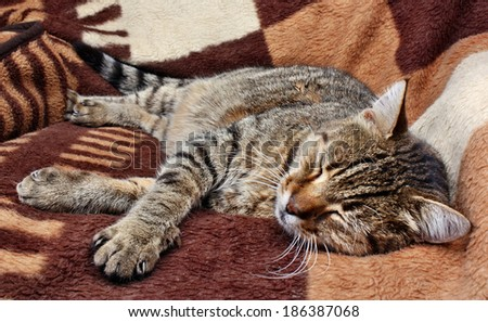 Comfortably sleeping cat on a blanket - stock photo