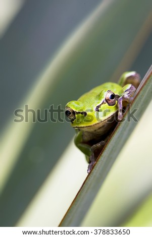 comic frog green background