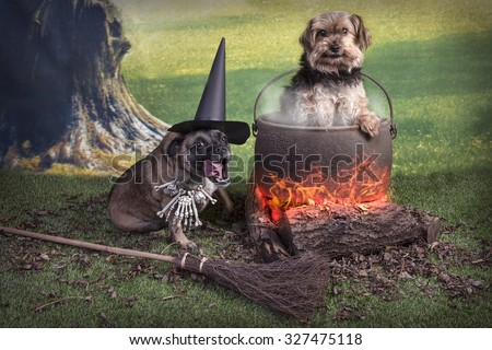 Comical Halloween image of two dogs, one as a witch and one in the cooking pot with filter added to make image softer and more surreal looking. - stock photo