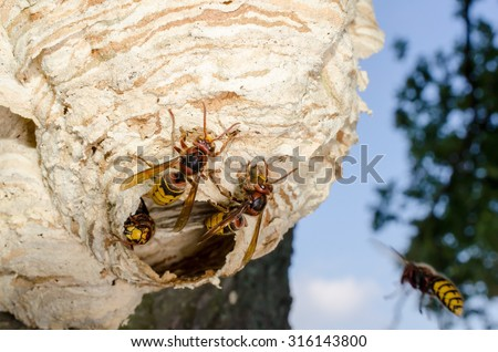 coming home, hornets - stock photo