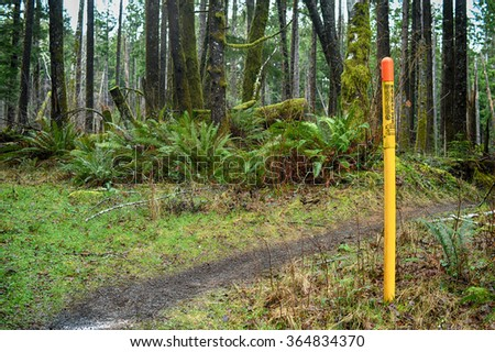 coming upon a buried natural gas pipeline while hiking in the forest of the Pacific Northwest