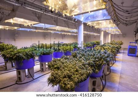 Marijuana stock photos royalty free images vectors shutterstock - Cannabis interior ...