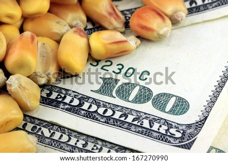 Commodity Trading Concept - US Currency One Hundred Dollar Bill with Yellow Corn - stock photo