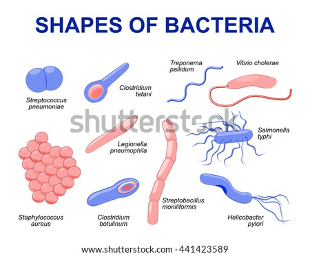 Salmonella Bacteria Diagram Trusted Wiring Diagrams