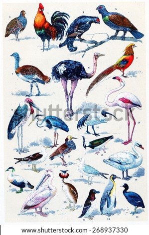 Common birds, vintage engraved illustration. La Vie dans la nature, 1890.   - stock photo