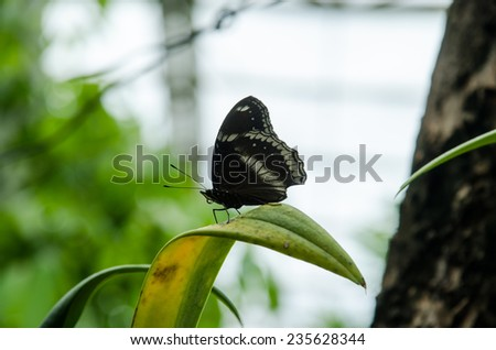 common butterfly in park blur background - stock photo